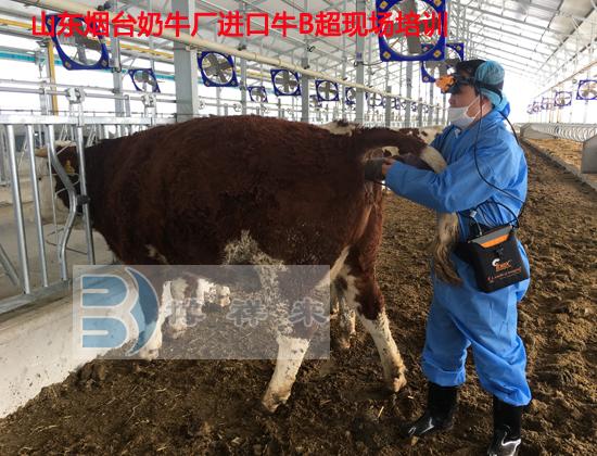 烟台进口牛用B超培训2